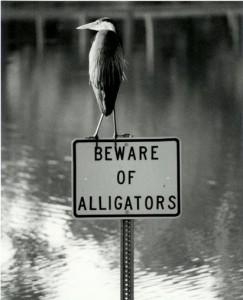 BewareofAlligators